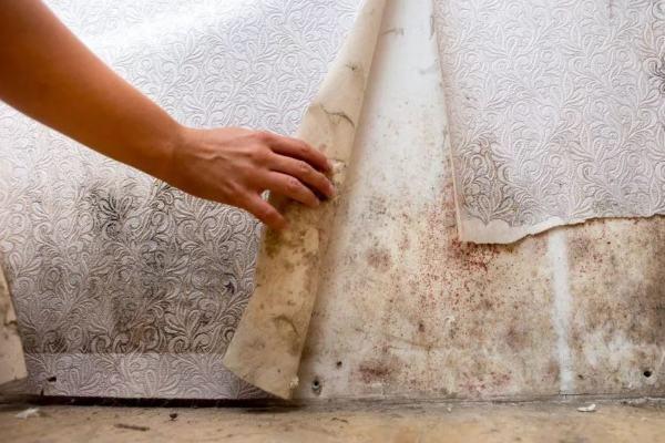 mold remediation company medford