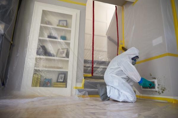 mold removal medford