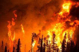 bootleg wildfire